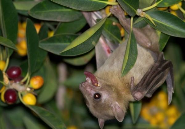 A 3-dimensional compass has been identified in the brain of the Egyptian fruit bat.
